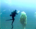 Gross encounter: diver meets giant loogie on National Geographic site.